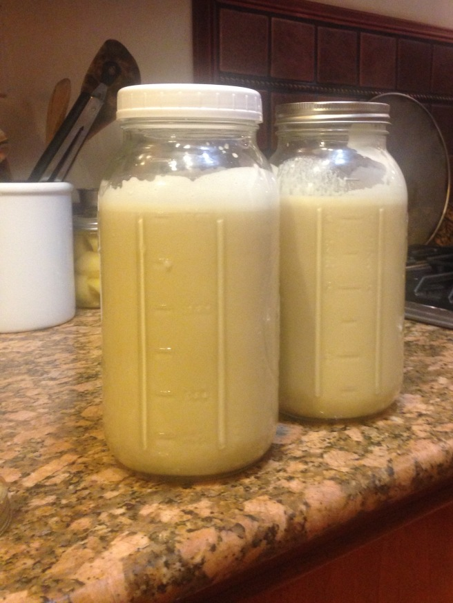 aged eggnog in half gallon jars on a counter